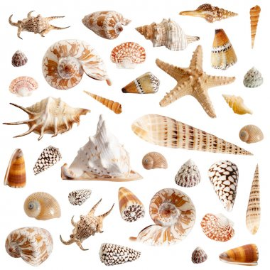 Many seashells