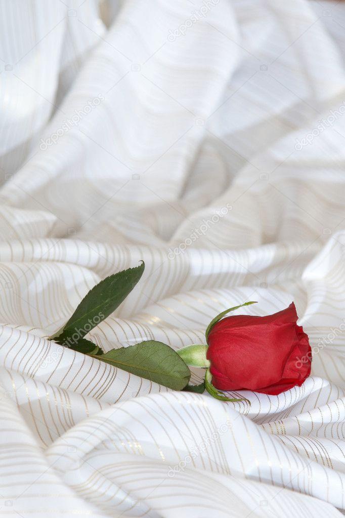 Красивые розы на кровати фото 516-713