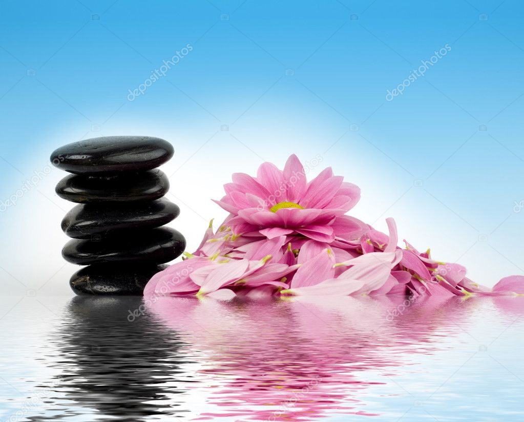 Цветы фото на воде