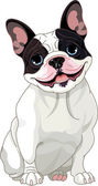 Photo French bulldog