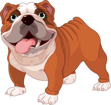 English bulldog , standing in front of white background clip art vector