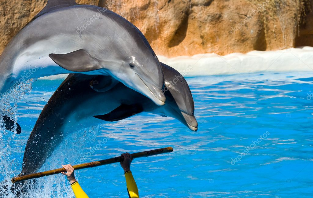 Dolphins jumping out from water