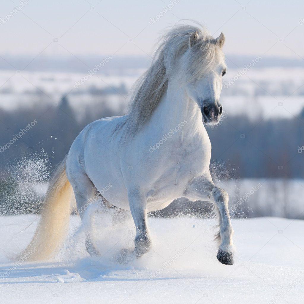 Фотообои Скачущая белая лошадь