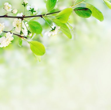White spring flowers on a tree branch over green bokeh background close-up shallow DOF stock vector