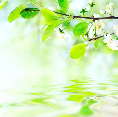 White spring flowers on branch on water waves