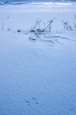 Winter ice pattern