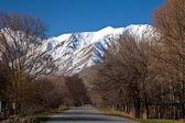 paesaggio di montagna di primavera