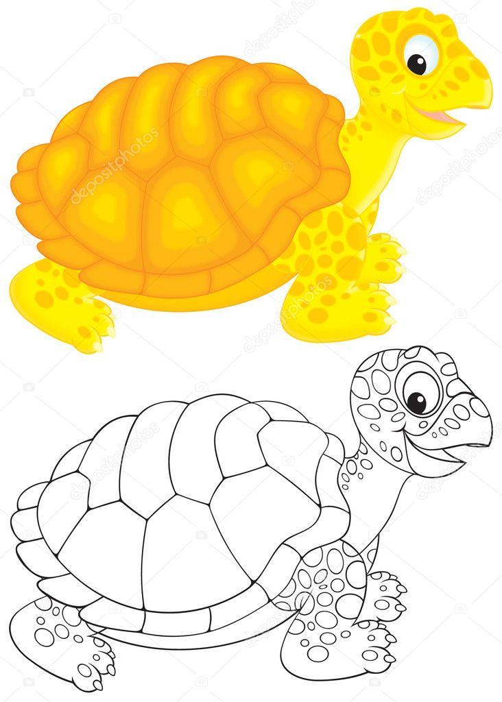 tortuga de tierra — Foto de stock © AlexBannykh #8870291