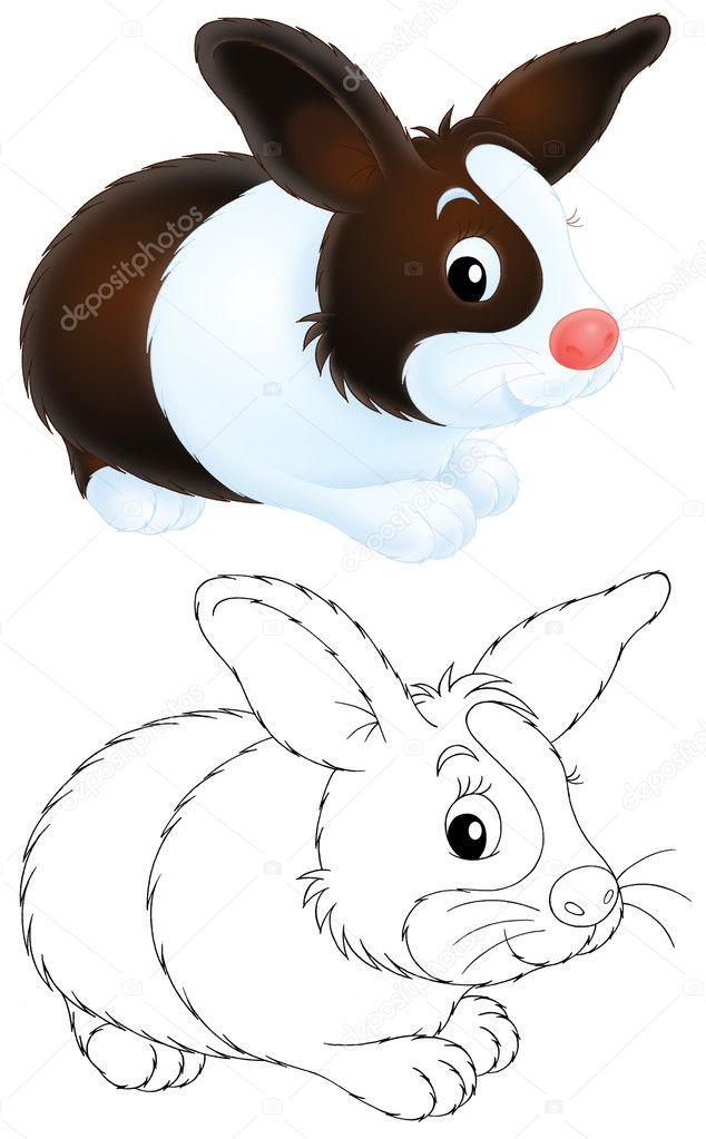 conejo — Fotos de Stock © AlexBannykh #9260136