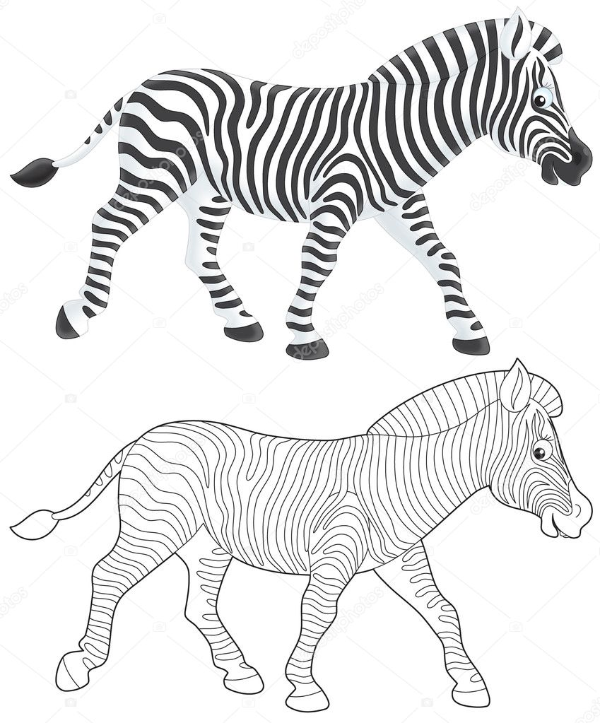 zebra walking u2014 stock photo alexbannykh 9260157
