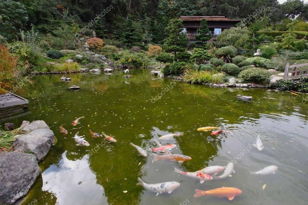 Un piccolo laghetto con pesci rossi foto stock kavramm for Laghetto pesci