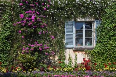 Wall and window, overgrown with flowers