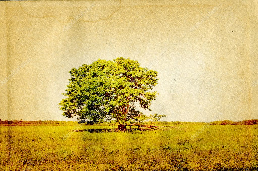 Old oak on old paper