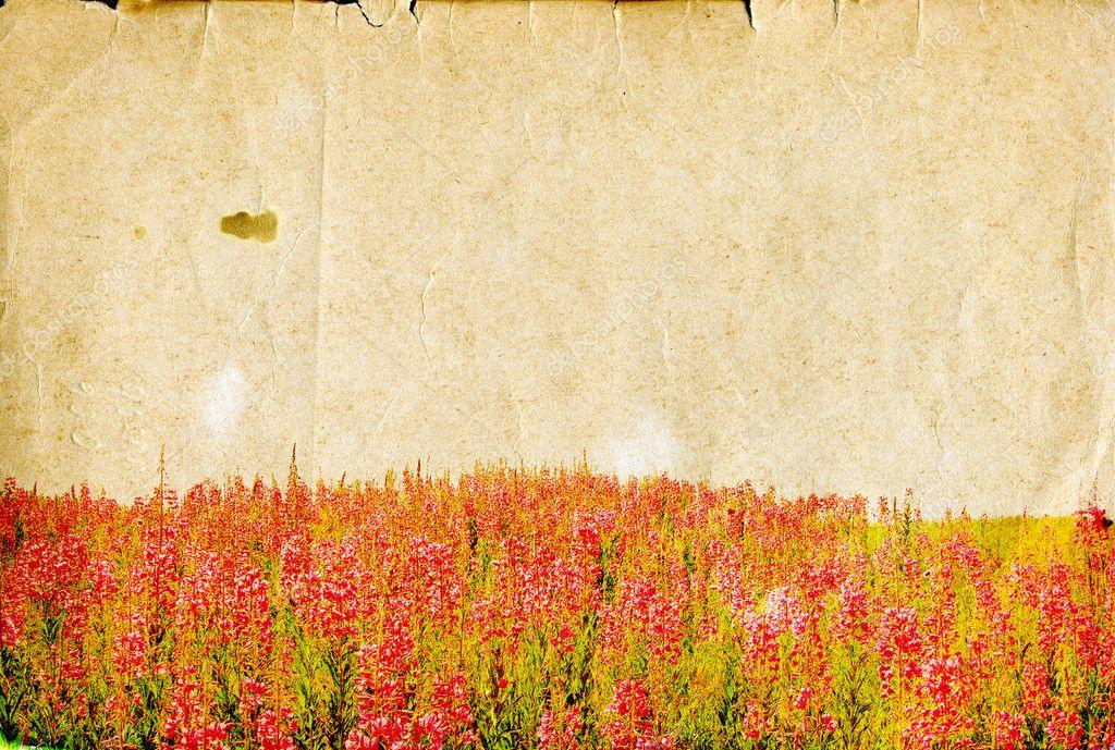 Field flowerses on aging paper
