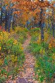 sentiero nella foresta dautunno