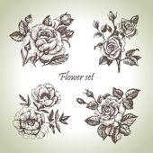 Virágos szett. Kézzel rajzolt ábrák Rózsa