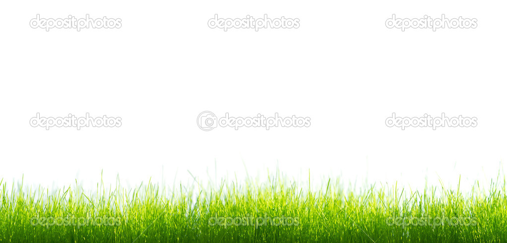 Green vibrant grass over white background