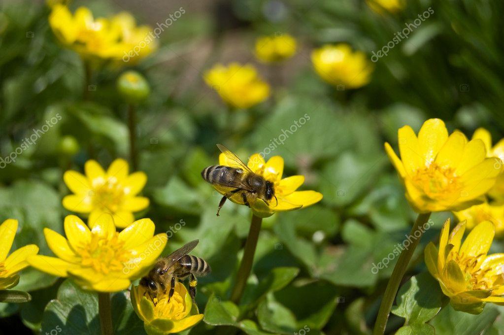 gelbe fr hlingsblumen auf gr ner wiese stockfoto soyka564 8855898. Black Bedroom Furniture Sets. Home Design Ideas