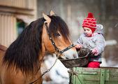 Kind, die Fütterung eines Pferdes