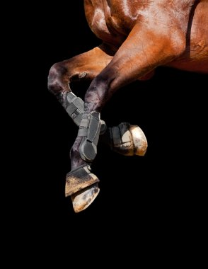 Horse legs isolated