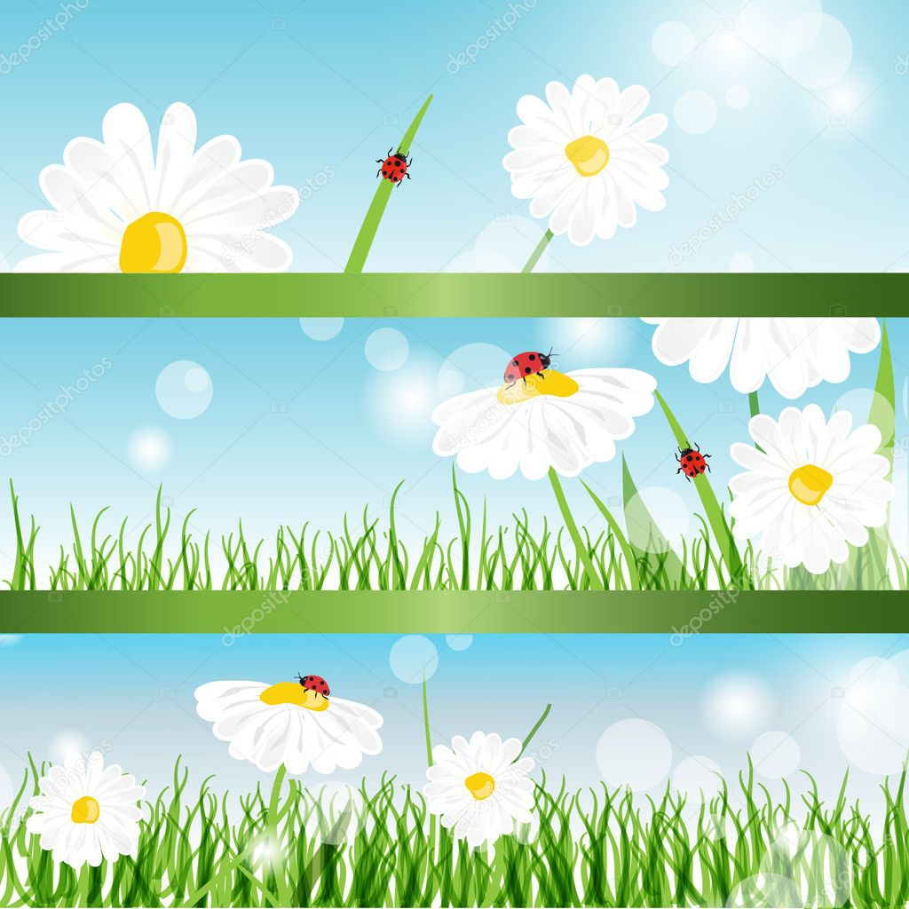 Summer banners with daisy and ladybugs in green grass