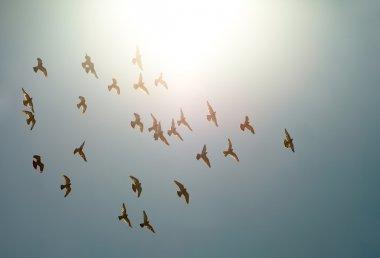 Flyng Birds