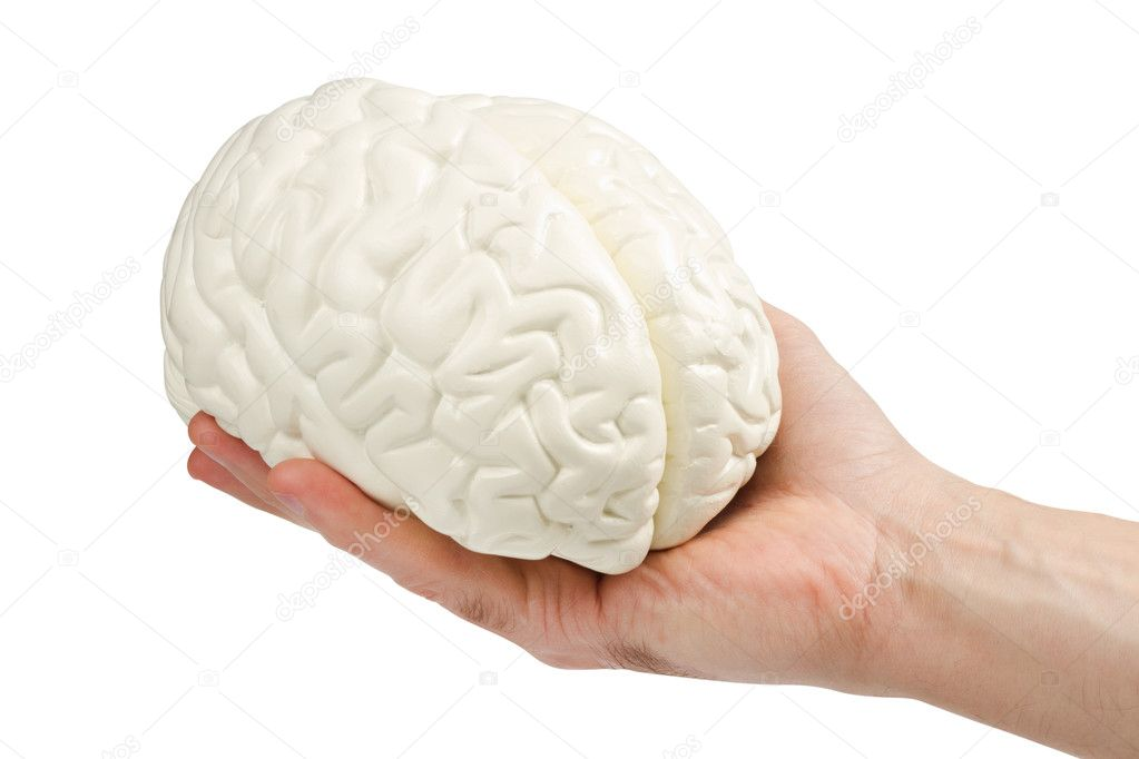 Anatomical model of the human brain in a mans hand