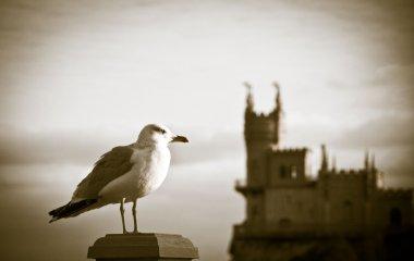 Seagull and Swallow's Nest, Crimea, Ukraine