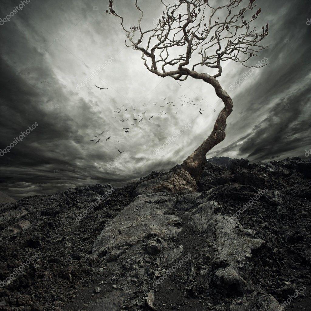 Фотообои Dramatic sky over old lonely tree.