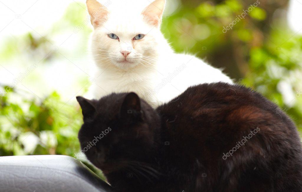 image de chattes noires très grosse queue transexuelle