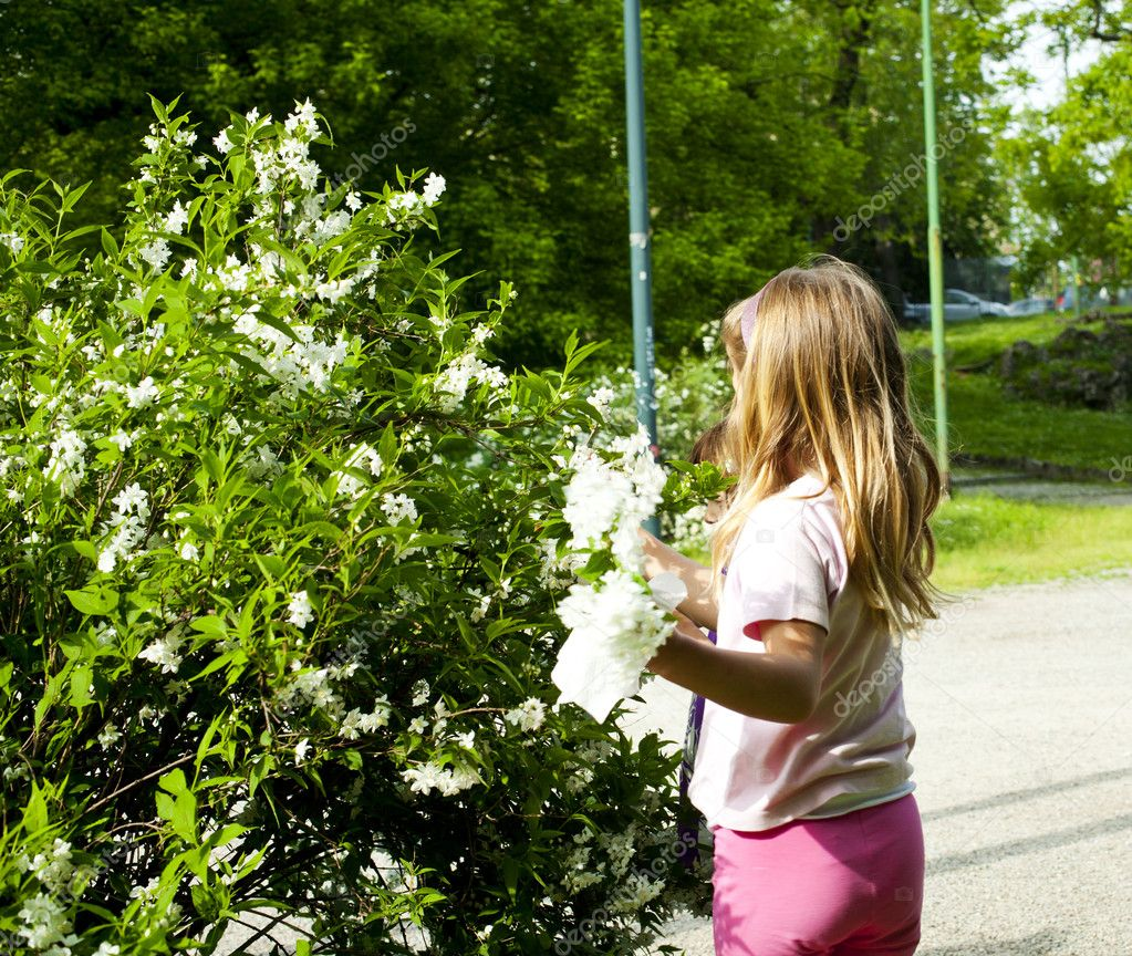 Что за цветок мать-и-мачеха фото