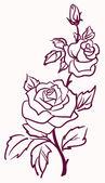 Fotografia tre stilizzato pallide Rose isolati su sfondo chiaro, vettoriale