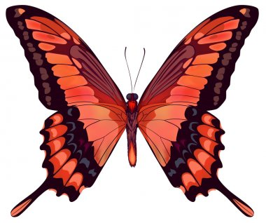 Beautiful vector isolated red butterfly