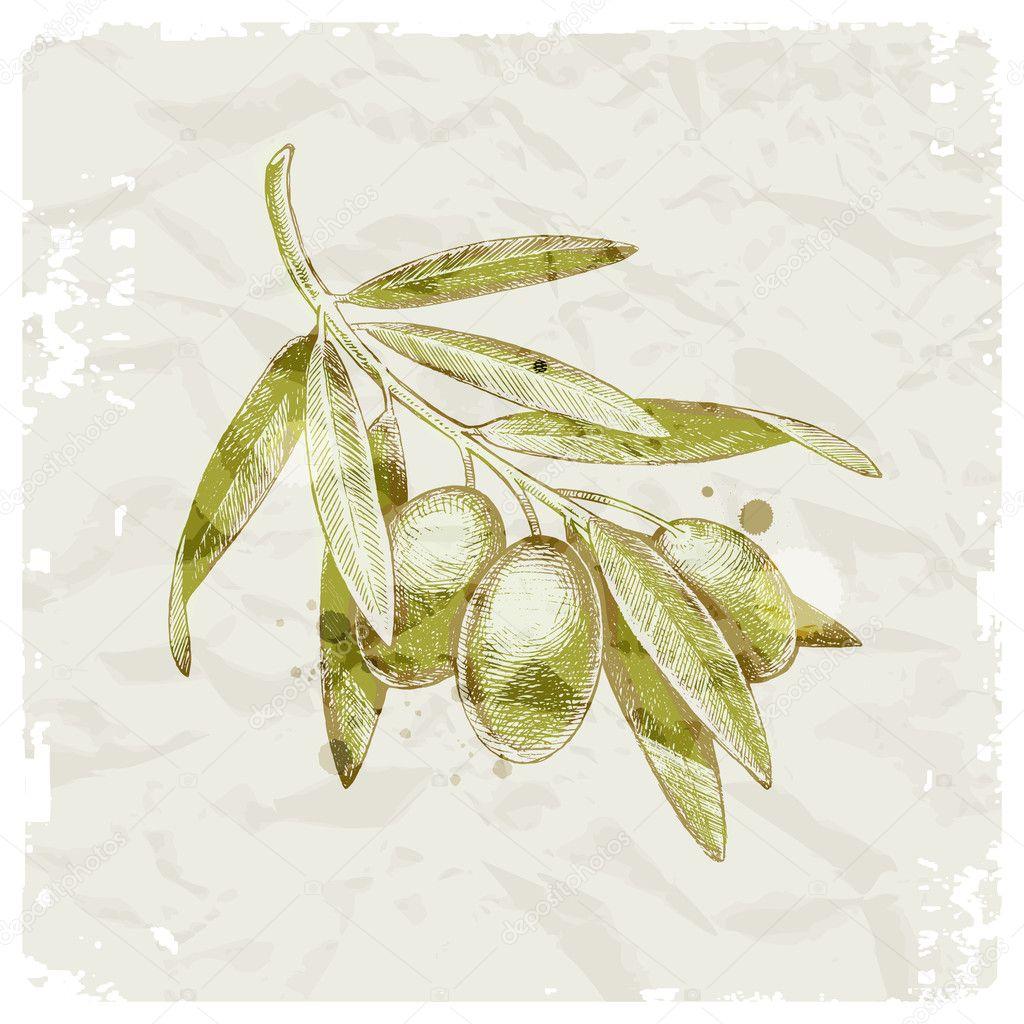 Grunge vector illustration - hand drawn olive branch