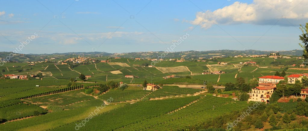 View on vineyards in northern Italy  — Stock Photo