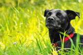 Ein Mischlingshund, der die Natur genießt