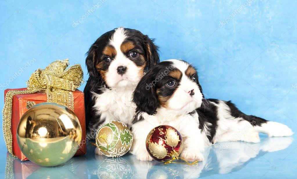 Cuccioli Di Spaniel E Regali Di Natale Foto Stock Lilunli 8038761