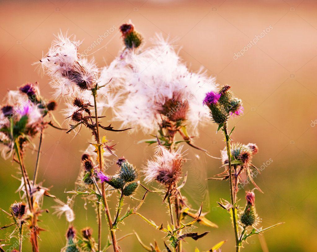 Как цветет колючий цветок
