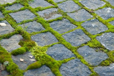 Moss on paving