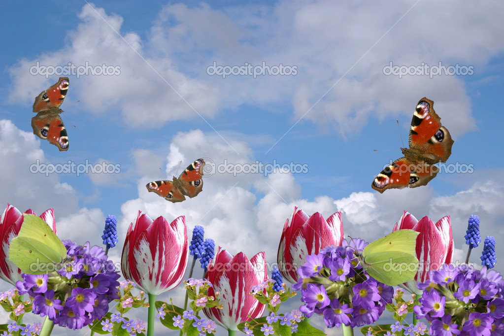 Composition From Spring Flowers And Butterflies On A Background Of