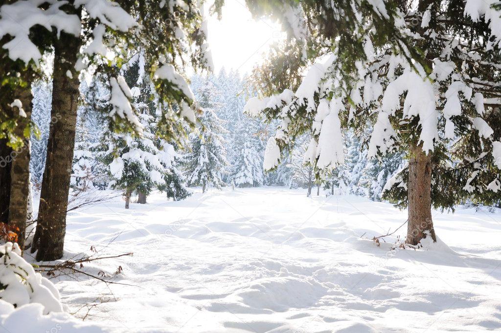 Winter beautiful scene tree and snow