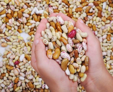 Many pieces and many kind of beans in hands, wallpaper, pattern