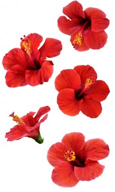 Flowers isolated on white. Colorful illustration.