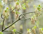 Fotografie kvetoucí zahrada na jaře