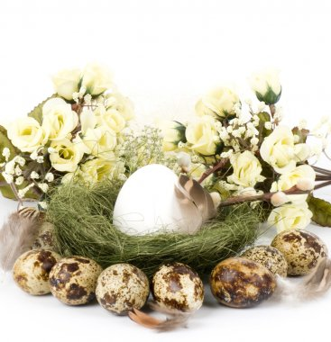 Nest with Easter quail eggs on white background