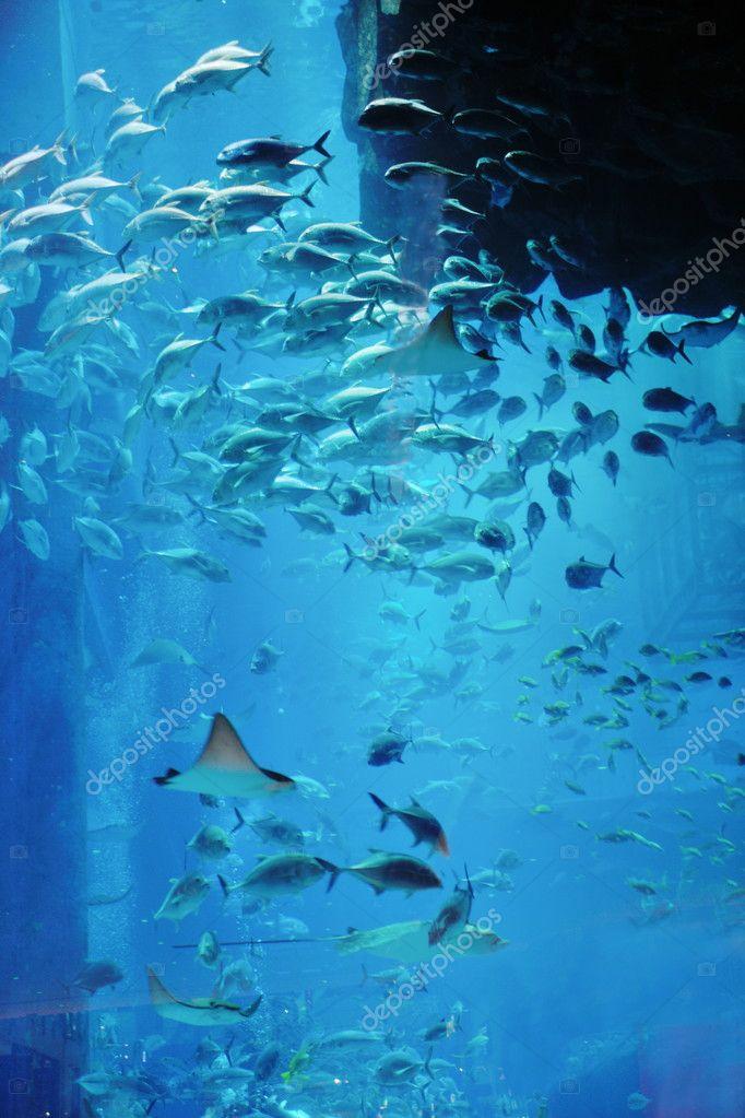 Acquario con pesci e barriera corallina foto stock for Pesci e acquario