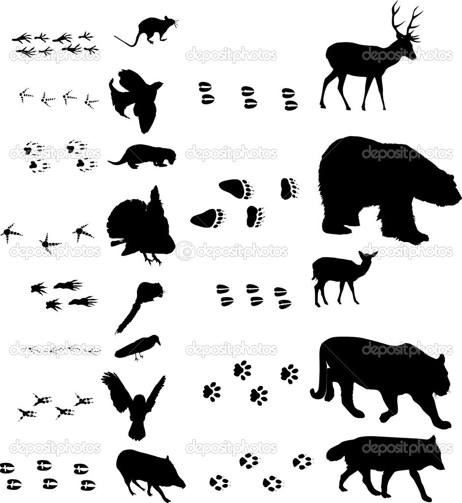 birds and animals with tracks