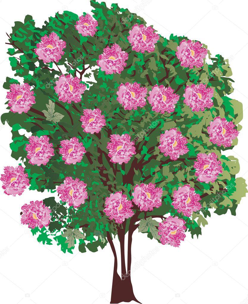 Rbol aislado con grandes flores rosas archivo im genes - Arbol de rosas ...