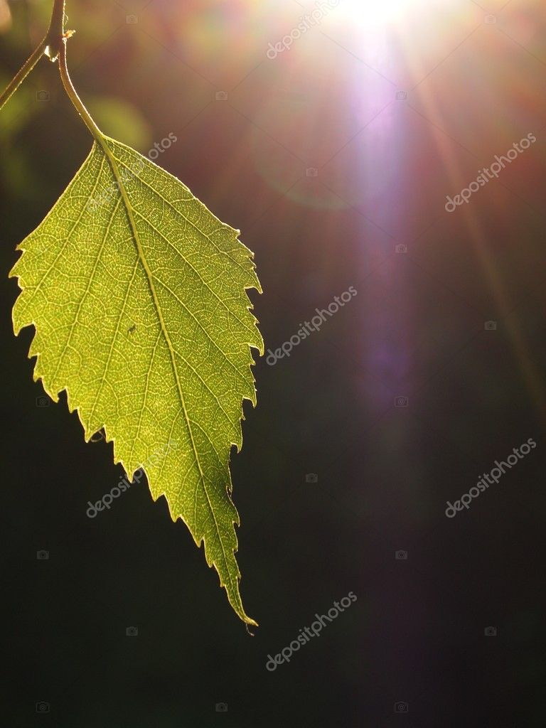 Nature Background. Green Leaves