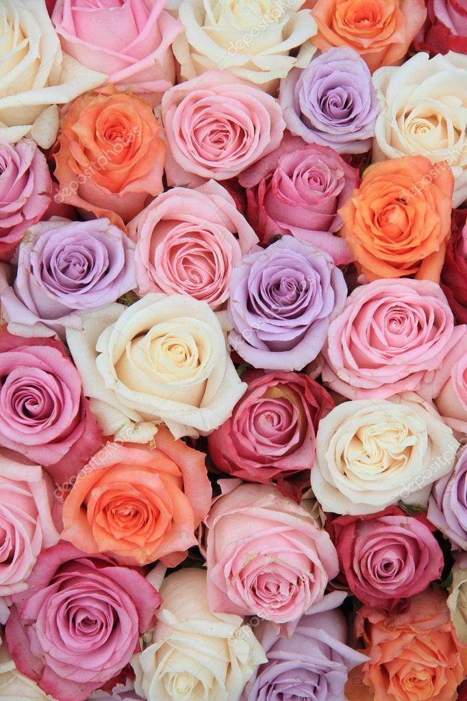 pastel rose wedding flowers stock photo portosabbia 10053621. Black Bedroom Furniture Sets. Home Design Ideas